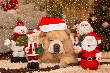 Nettoyage pour les fêtes de Noël à Montréal